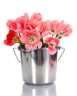 Schöne rosa tulpen im eimer auf weiß
