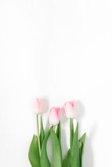 Schöne rosa tulpen in der wand. schöne frühlingsblumen. karte für den urlaub
