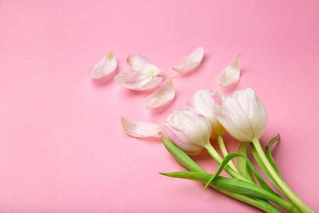 Schöne rosa und weiße tulpen auf rosa hintergrund