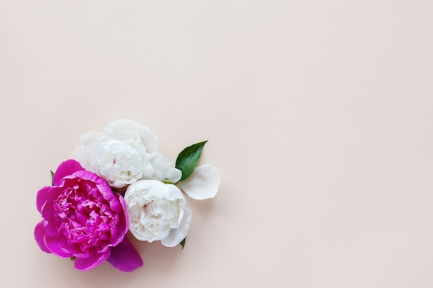 Schöne rosa weiße pfingstrose auf hellem hintergrund