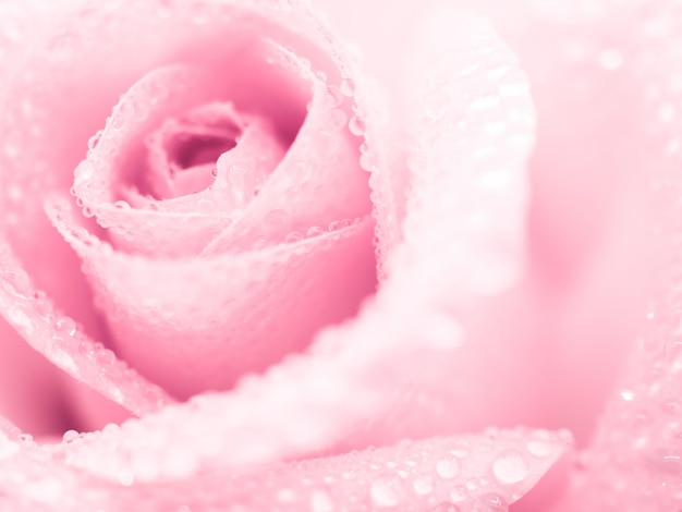 Schöne rosafarbene rosafarbene blume