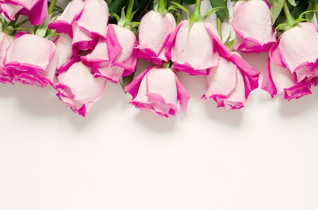 Schöne rosafarbene rosen getrennt auf weiß