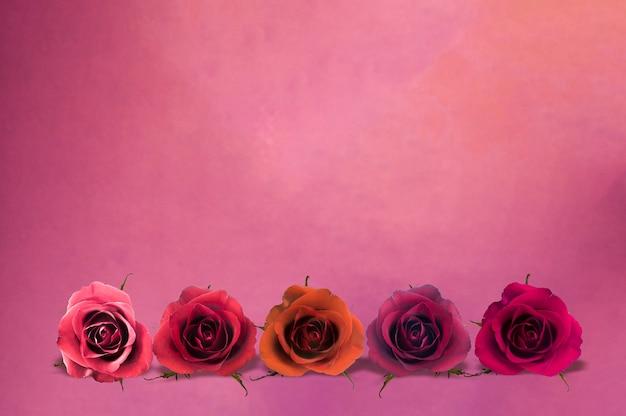 Schöne rosen, die auf lila oberfläche mit kopienraum, blumenhintergrund, glücklichem valentinstag, muttertag, flacher lage, draufsicht legen