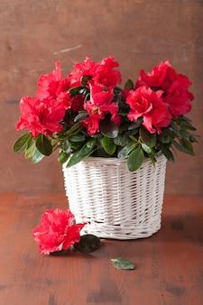 Schöne rote azaleenblumen im korb über rustikalem hintergrund