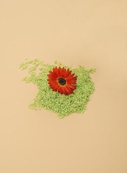 Schöne rote blume auf grünen kieselsteinen frühlingskonzept