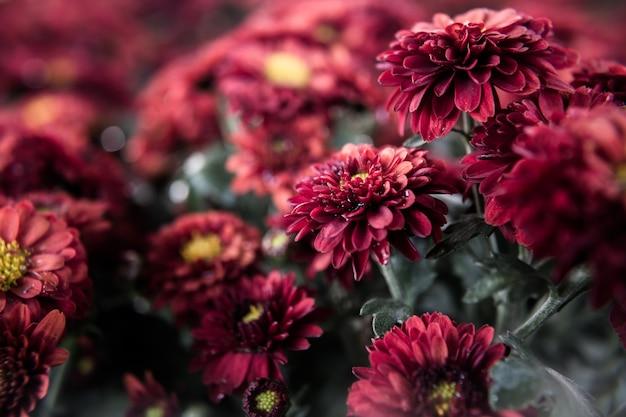 Schöne rote blumen in einem völlig natürlichen.