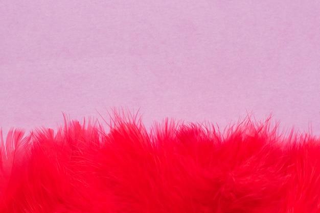 Schöne rote federn auf lila hintergrund