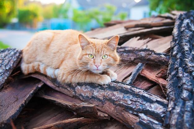 Schöne rote katze legt auf hölzernen sommer
