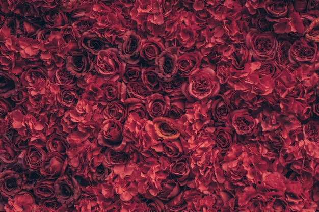 Schöne rote rosen. blumenwand. nahaufnahme von riesigen roten rosen. valentinstag geschenk. liebe und leidenschaft. blumendesign.