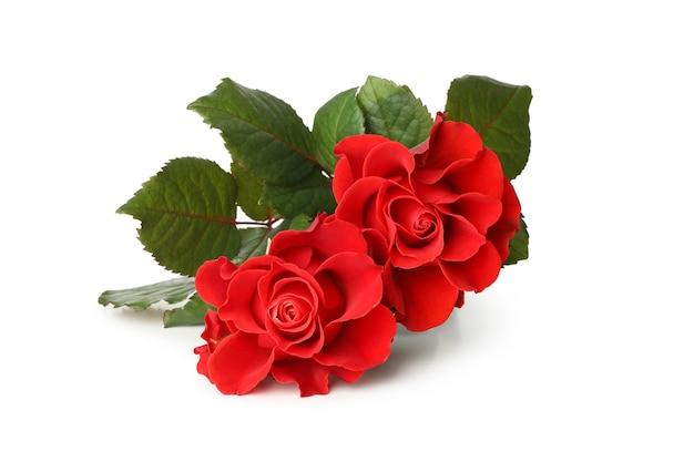 Schöne rote rosen lokalisiert auf weißem hintergrund