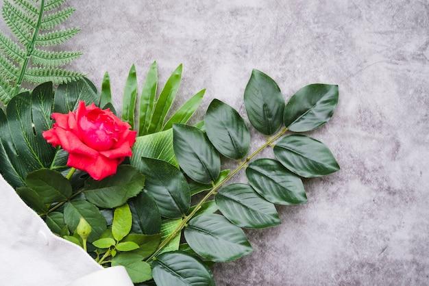 Schöne rotrose auf grünen zweigen über dem granithintergrund