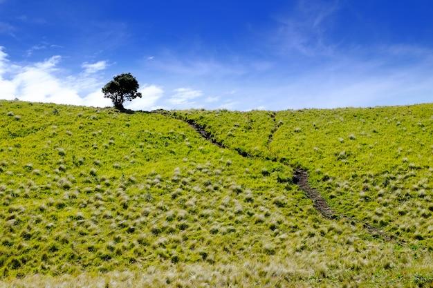 Schöne savanne mit baum auf merbabu mountain, zentral-java, indonesien.