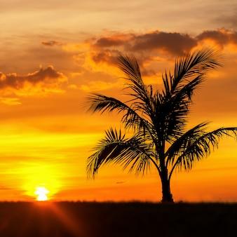 Schöne schattenbildkokosnusspalme auf himmel neary seeozeanstrand zur sonnenuntergang- oder sonnenaufgangzeit für freizeitreise und ferienkonzept