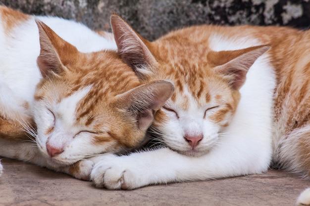 Schöne schlafende katzen