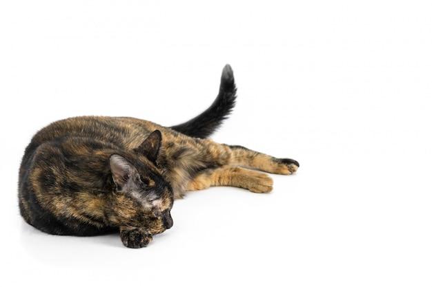 Schöne schwarze katze und gelbes muster, das an lokalisiert auf weißem hintergrund schläft.