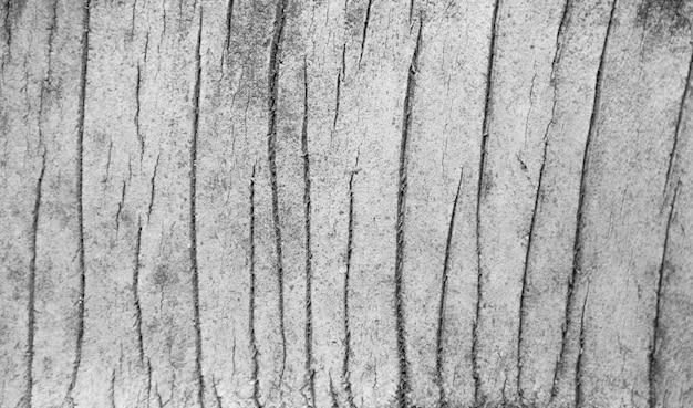 Schöne schwarzweiss-kokosnussbaumstammbeschaffenheit