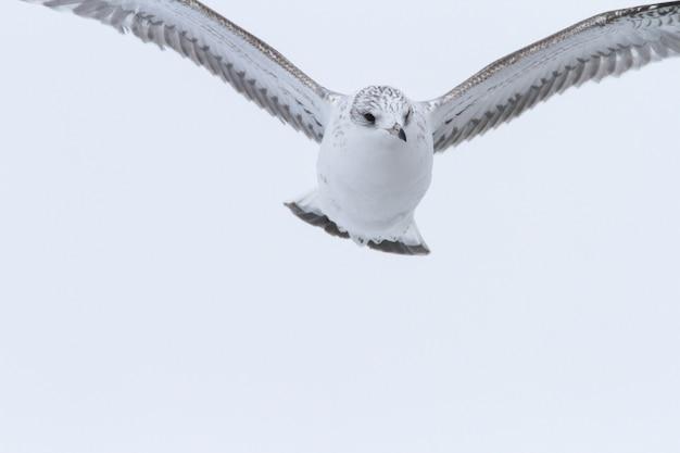 Schöne seemöwen, die in den himmel fliegen. möwe fliegen über kopf