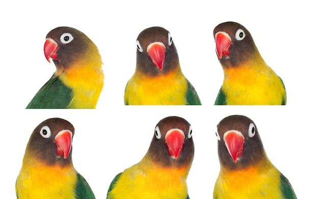 Schöne sequenz mit porträts eines papageis