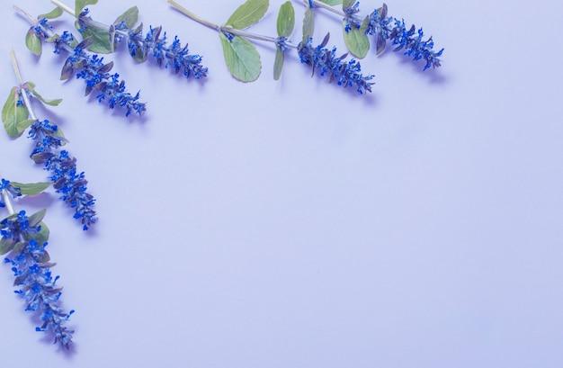 Schöne sommerblumen auf blauem hintergrund