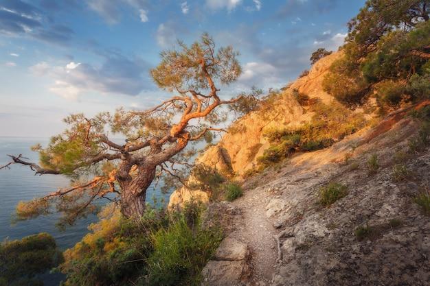 Schöne sommerlandschaft in den bergen bei sonnenaufgang