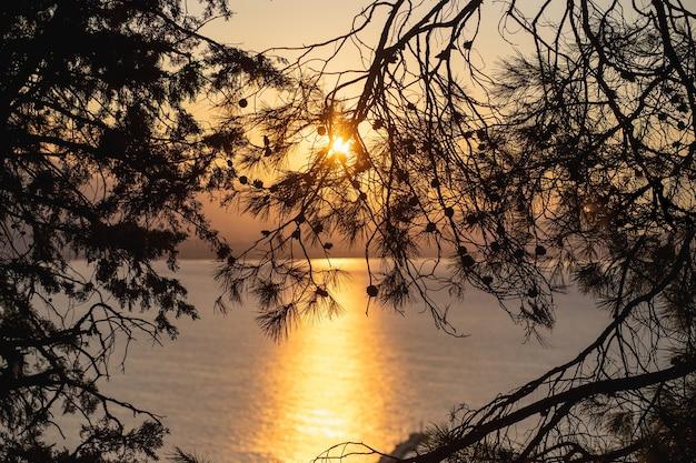 Schöne sonnenaufgang-silhouetten von tannenzweigen gefüllt mit dem goldenen licht der morgensonne