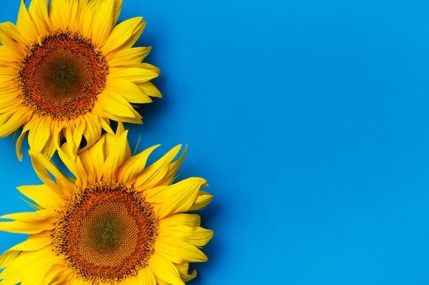 Schöne sonnenblumen auf blau