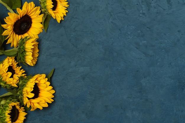 Schöne sonnenblumen auf blauer oberfläche
