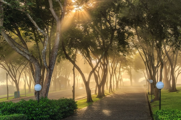 Schöne sonnenstrahlen im grünen wald, provinz surat thani, thailand. warmen ton bearbeiten