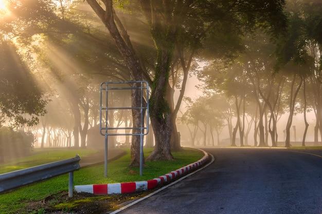 Schöne sonnenstrahlen im grünen wald, provinz surat thani, thailand.