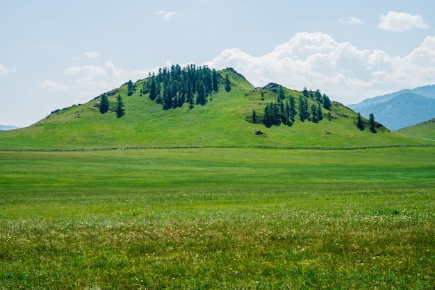 Schöne sonnige landschaft mit grünem waldberg
