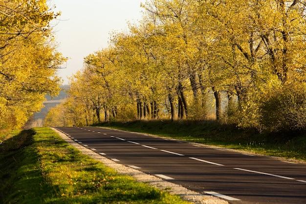 Schöne straße in den schönen bäumen eine landstraße im herbst herbst im park leere rennstrecke