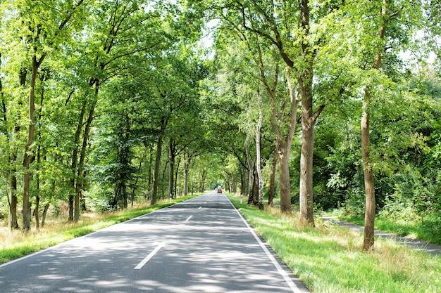 Schöne straße oder weg in gasse mit grünen bäumen und gras im sommer sonnig im freien mit auto