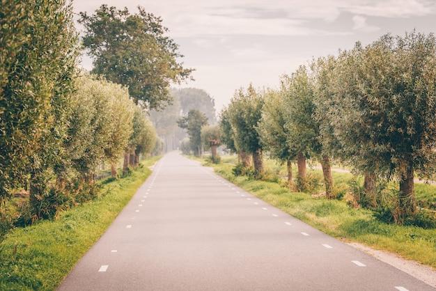 Schöne straße, umgeben von grünen bäumen