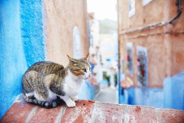 Schöne streunende katzen laufen in den straßen von marokko
