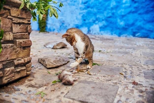 Schöne streunende katzen schlafen spaziergang in straßen marokko