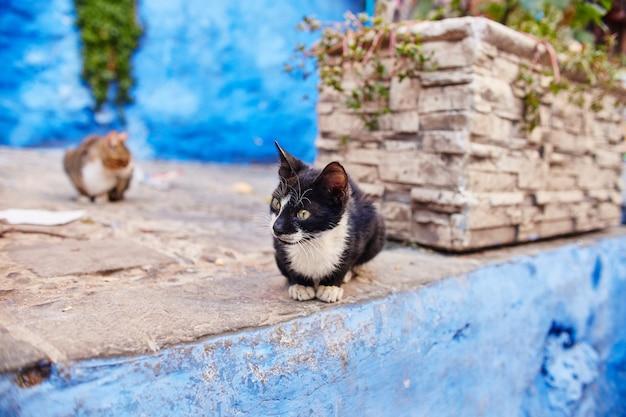 Schöne streunende katzen schlafen und gehen auf den straßen