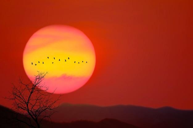 Schöne super sonnenuntergang zurück silhouette vögel fliegen und trocknen bäume im dunkelroten himmel berg