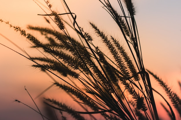 Schöne szene mit wellenartig bewegendem wildem gras am schönen romantischen sonnenunterganghintergrund