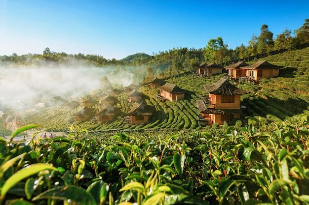 Schöne szenische ansicht des hauses auf dem teegebiet auf berg in mae hong son, thailand