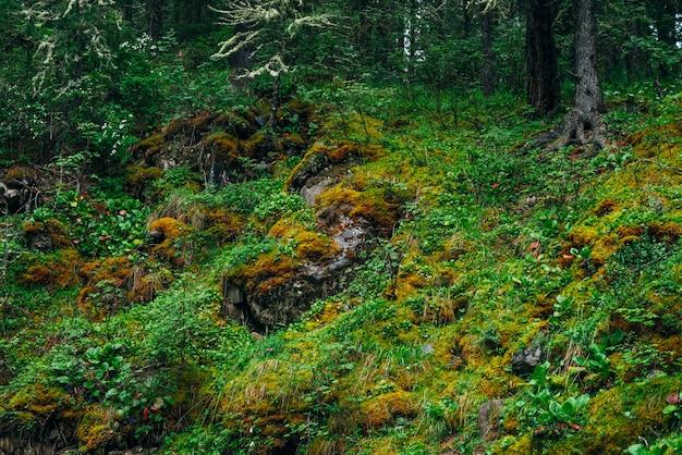 Schöne taiga mit reicher vegetation am moosigen steilen hang. frisches grün und dichtes moos am berghang. atmosphärische grüne waldlandschaft mit schöner flora und moosen. frische der hölzer.