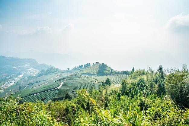 Schöne teegartenreihenszene lokalisiert mit blauem himmel und wolke, entwurfskonzept für den teeprodukthintergrund, kopienraum, luftaufnahme