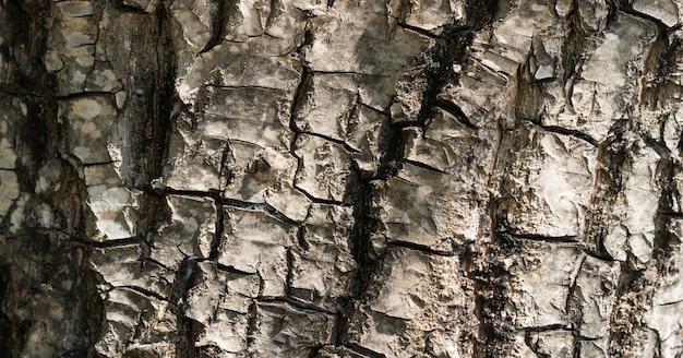 Schöne textur der großen braunen alten baumrinden im wald