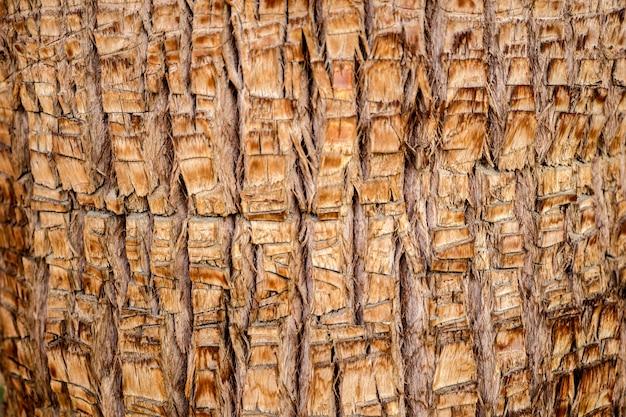 Schöne textur des großen kokospalmenstamms
