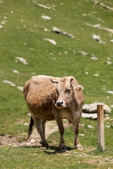Schöne tiere auf dem land aus nächster nähe