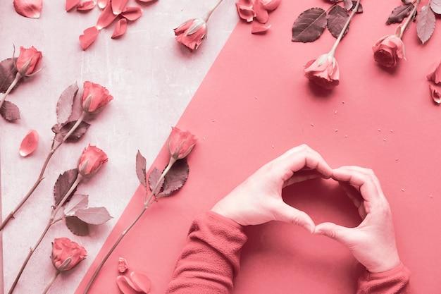 Schöne trendige monochrome geometrische rosa wohnung lag mit korallenroten rosen. weibliche hände in flauschigem rotem vlies in form eines herzens. valentinstag, muttertag oder geburtstagskonzept.