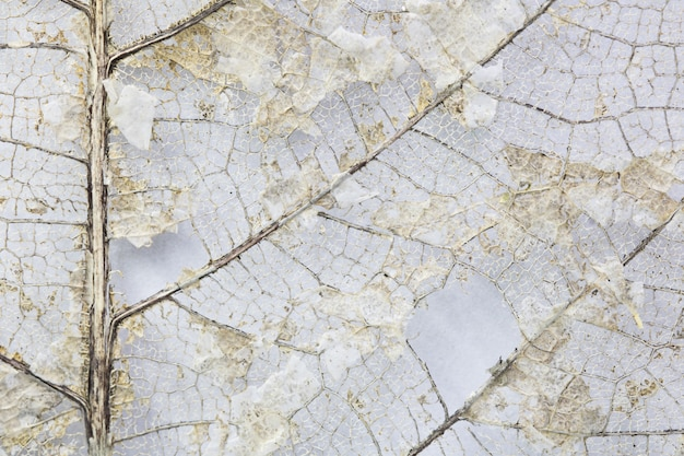 Schöne trockene blätter der nahaufnahme, skelett treibt auf weißem hintergrund mit kopienraum blätter