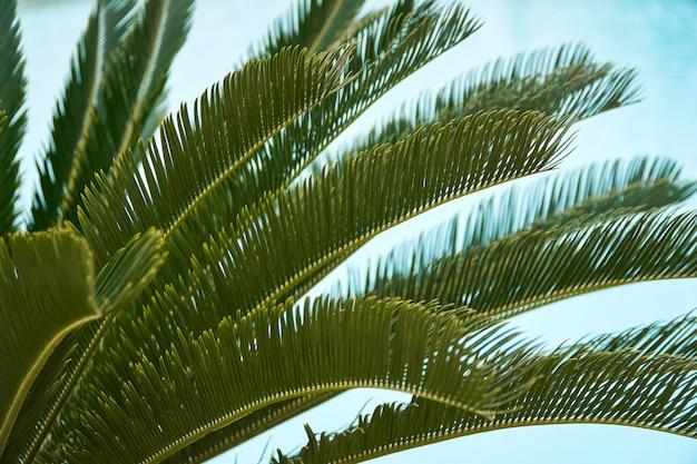 Schöne tropische blattbeschaffenheit auf himmel
