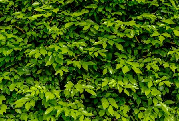 Schöne tropische grüne blätter