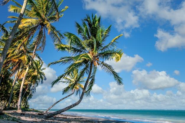 Schöne tropische landschaft von kokospalmen entlang der küste unter bewölktem blauem himmel