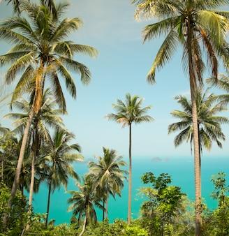 Schöne tropische landschaft